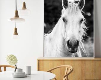 White Horse, Horse Print, Black and White Photography, White Horse Print, White Horse Photo, Wilderness Print, Equestrian, Animal Wall Art