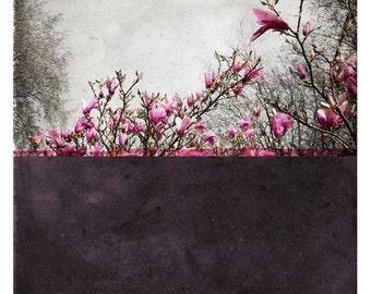 Pole Prune  - Fine Art Photography (Landscape - Print - Color Block - Nature - Botanical - Painting)