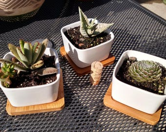 Various succulents in stylish ceramic pots with bamboo trays