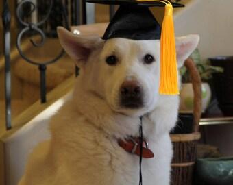 L'obtention du diplôme Cap pour chiens et chats (votre choix de pompon couleur or-rouge-vert-bleu-violet) - chapeau de Graduation de chien