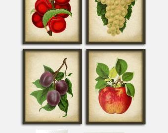 Botanical print set of 4 fruit prints, various juicy fruits, red apple print, plum, apricot, grape, vintage botanical art, kitchen decor