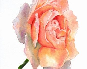 Rose Painting Print, Pink Rose, Multicolor, Watercolor, Fine Art, Home Decor, Floral, Flower, Fine Art, Realism, 5 x 7, Flower Painting