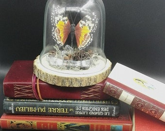 Bell/glass globe butterfly on log (curio cabinet, vanity)