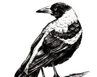 Magpie Print Hand Drawn Australian Bird Illustration