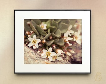 Alpine Spring Beauty Fine Art Photograph // White Wild Flowers Colorado Mountain // 5x7 8x10 8x12 11x14