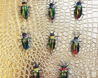Elytra Beetle Magnets