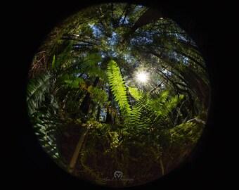 Forest Fisheye Photo Print