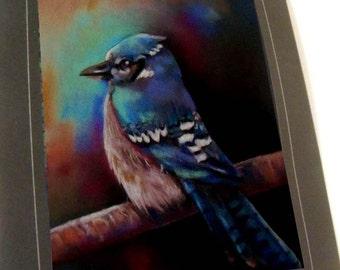 greeting card print of original art-  blue jay  Zentangle