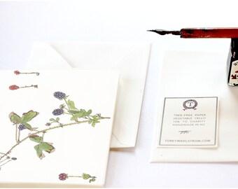 Wild Blackberries, Botanical Note Cards
