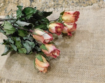 Dried Roses, Roses, Coral dried roses,