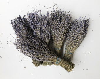 5 BUNCHES, 1,250 Lavender Stems, Preserved, Dried English Lavender, Wedding, Wholesale Bulk Home Decor Dry Bunch Bouquet Dried Flowers