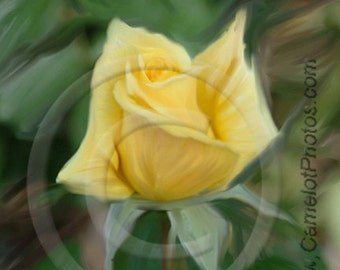 Roses are Yellow_1 Fine Art Print by donPuckett