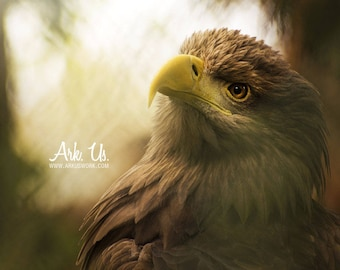 Poster portrait tight brown Eagle on the beak yellow and the eyes