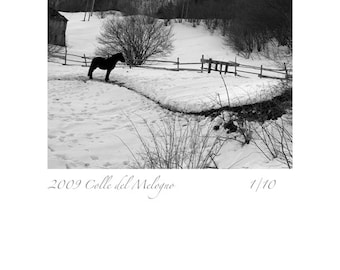 2009 Colle del Melogno,limited edition 1/10,horses,snow,rural,mountains,animals,pets,