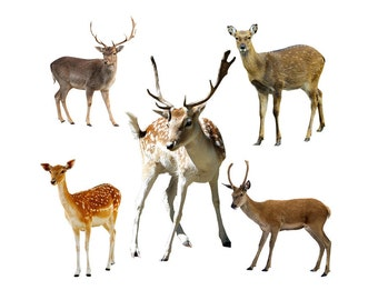 Deer overlay photo animal photoshop png