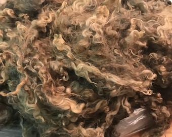 Colored Cotswold Lamb - 1 lb 14 oz