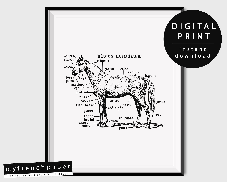 Berühmt Grund Pferd Anatomie Galerie - Anatomie Ideen - finotti.info