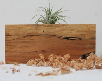 Spalted Maple Air Plant Holder  M 11