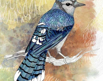 Bird art print, Blue Jay ink drawing. Bird watercolor print.