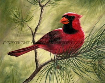 Red Cardinal Bird Print of painting by cindypriceart