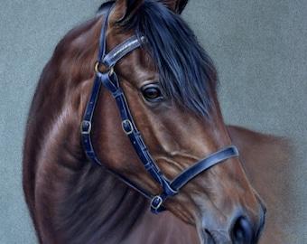 Horse portrait, Original pastel drawing Australian Stock Horse