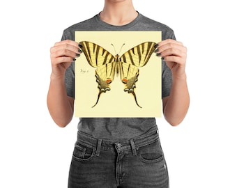 Butterfly Poster, Yellow Tiger Swallowtail, 10 inch Square Matte Archival Paper Natural History Print, Room Decor
