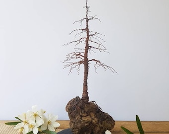 Rusted Wire Pine Tree on a driftwood and slate base