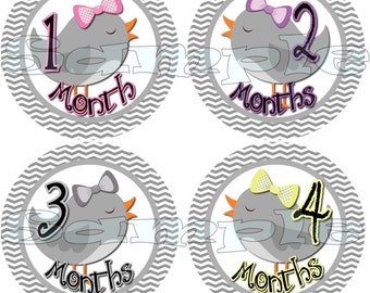 Bird Baby Girl Monthly stickers Month to Month stickers Baby Shower gift Onepiece infant month stickers Milestone stickers Bodysuit stickers