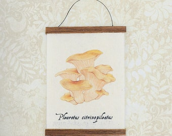 Miniature Natural History Wall Hanging - Pleurotus citrinopileatus