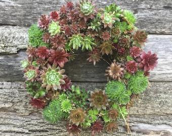 Succulent Wreath Round 14 inch  WINTER HARDY!