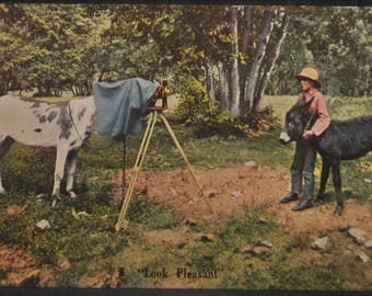 Comic Antique Postcard Animal Horse Donkey Photography Look Pleasant 1910