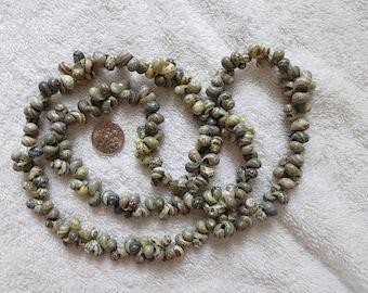 Australian aboriginal shell necklace Arnhem Land