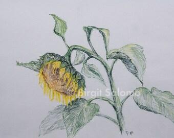 Sunflower, sunflower, flower, fine-print 20x30 cm, poster 30x40 cm, fine-print 29, 7x42 cm, original pastel 30x40 cm