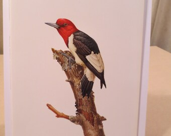 Vintage Red-Headed Woodpecker 1960s Frameable Picture, Wall  Art Print of Bird Watercolor by  J.F. Lansdowne Item 543