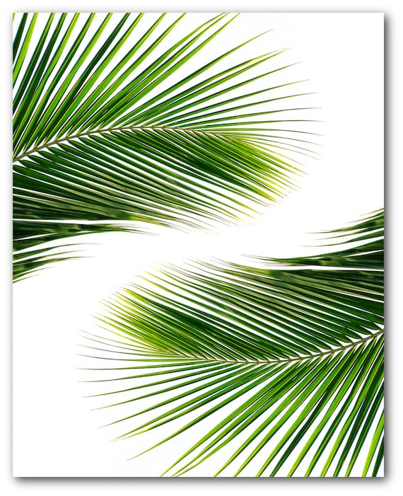 imprim de feuille de palmier feuille tropicale abstrait. Black Bedroom Furniture Sets. Home Design Ideas