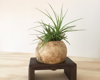 Coconut Air Plant Holder