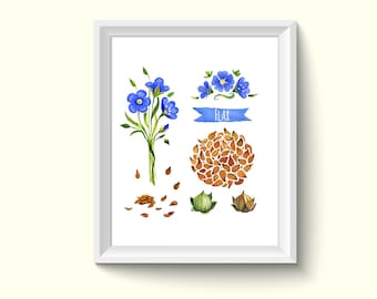 Flax Seeds Watercolor Painting Poster Art Print P201