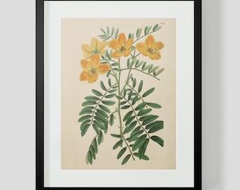 Botanical Print Plate 1322