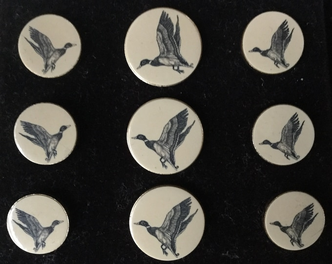 Set of 9 Unused Barlow Scrimshaw Duck Buttons In Original Box Duck Button