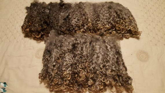 Beautiful Leicester Logwool Locks - from the UK! Natural Lustrous Silvery Gray with golden tips.  Undyed Washed Separated