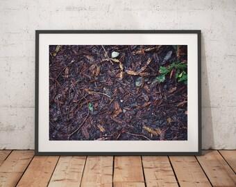 Forest Floor, Big Sur, California, Print, Wall Art,