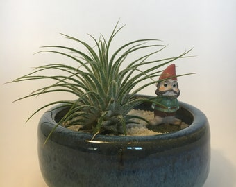 Air Plant in NC Pottery