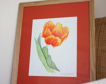 Framed Orange Parrot Tulip flower original watercolour painting, wood frame, gift, mothers day present
