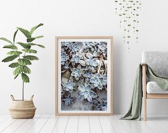 Fine Art  Print - (Print # 563) Succulents -  Fine Art Print - Two Paper Choices-  Natural Decor - Boho -