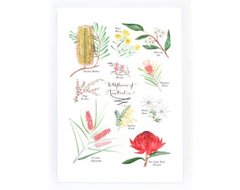 Some Wildflowers of Australia - archival art print