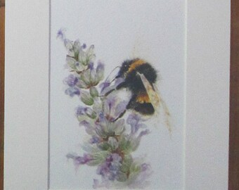 Bee on lavender, watercolour print in a 10 x 8 mount, ready to pop into a frame.