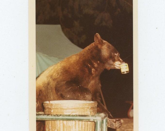 Vintage Snapshot Photo: Bear Raids Campground [86685]