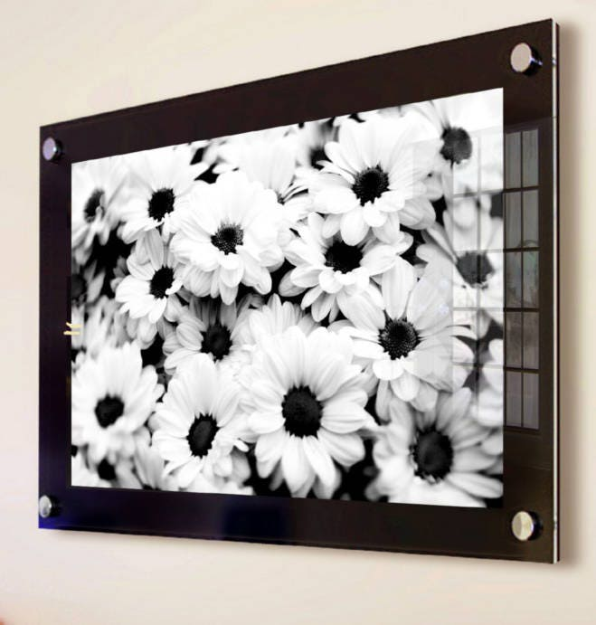Black Cheshire Acrylic 10mm 20 X 24 50 X 60 Cm 24 X 20 Picture