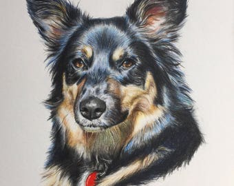 Pet Portrait Drawing, Custom Art in Colored Pencil, From Photos, Animal Lover Gift, Cats, Dogs, Horses, Rabbits