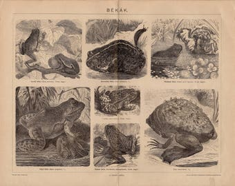 Antique engraving of frogs and toads from 1893